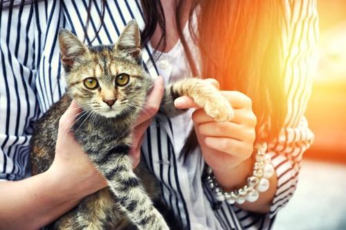 女性に抱かれて左手を触られている猫
