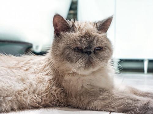 眠そうな表情の猫