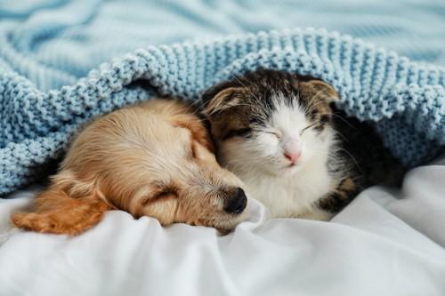 一緒にベッドで寝る子犬と子猫