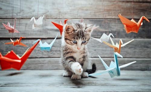 鶴のモビールで遊ぶ子猫