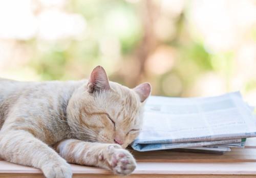 新聞紙を枕にして眠っている猫