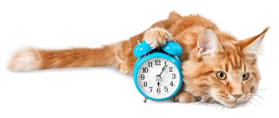 時計を抱えて寝転ぶ猫