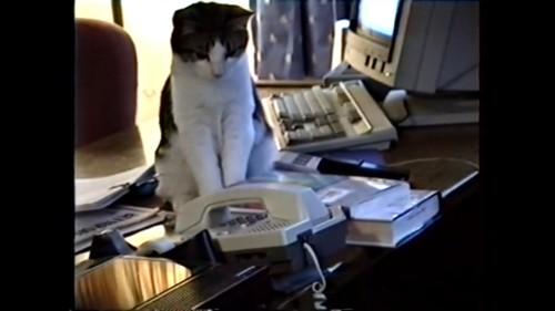 電話の前で考え込む猫