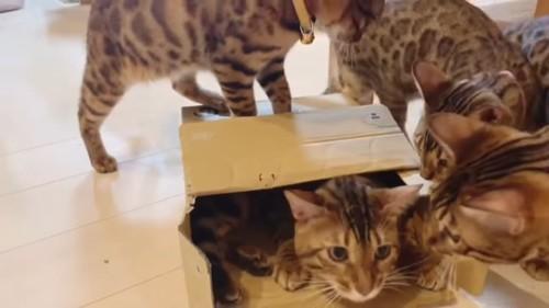 箱のまわりに集まる猫