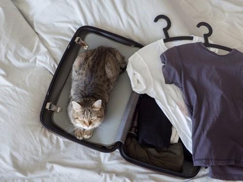スーツケースに入っている猫