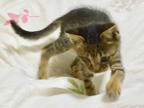 ソファの上を歩いている猫