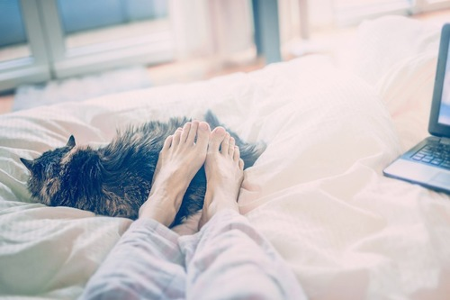 飼い主の足元で眠る猫