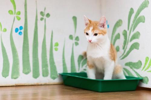 猫用のトイレで用を足している猫