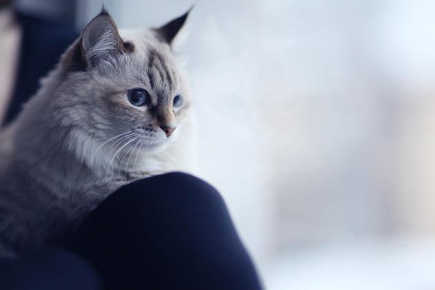 指原さんかもしれない人と猫