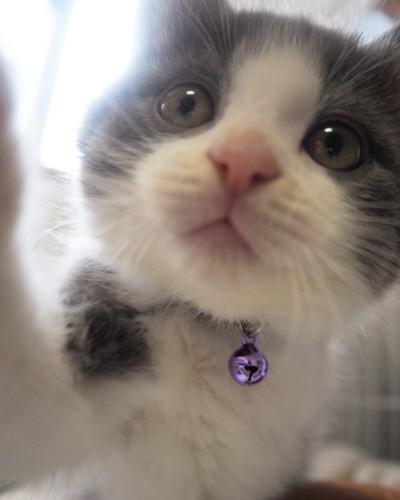 子猫の口のアップ