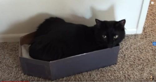 黒い箱に入った黒猫