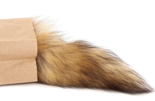 袋から尻尾だけ出ている猫
