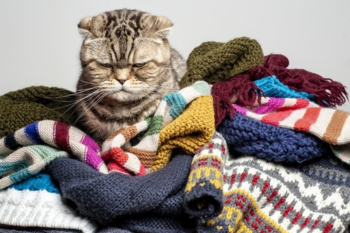 どれを着ようか迷う猫