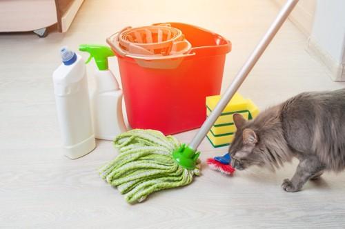 掃除用品の匂いを嗅ぐ猫