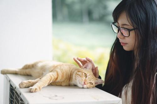 室外機の上で横たわる人懐っこい猫と女性