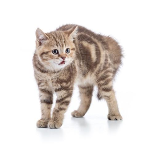 しっぽを下に下げて怖がる猫