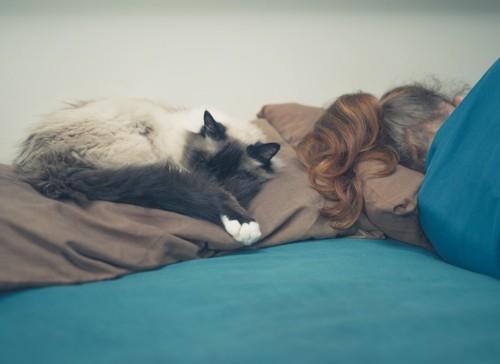 飼い主の枕の上に眠っている猫