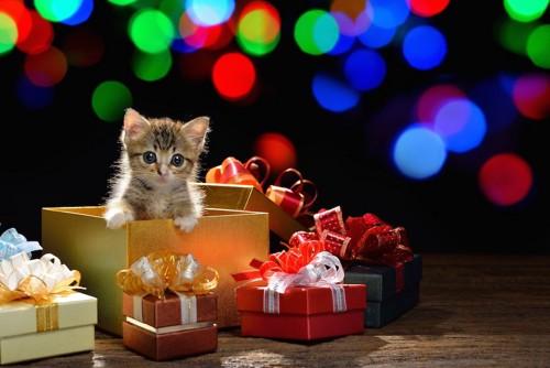 プレゼントボックスと子猫
