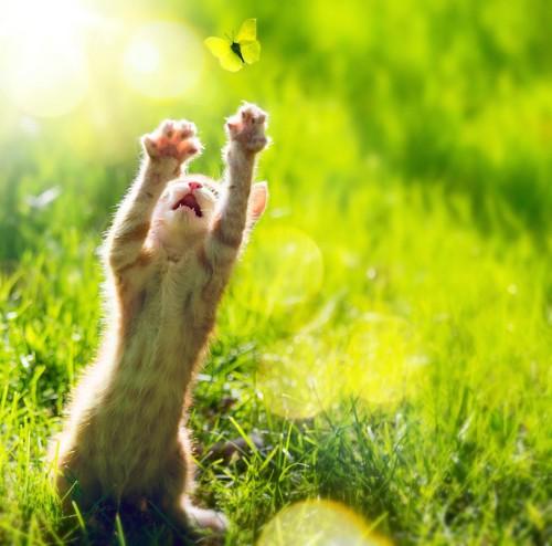蝶々を追いかけて手を伸ばす子猫