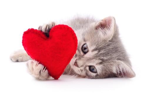 赤いハートのクッションと子猫