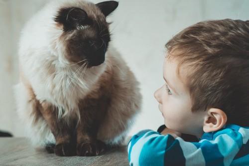 見つめ合う子供と猫