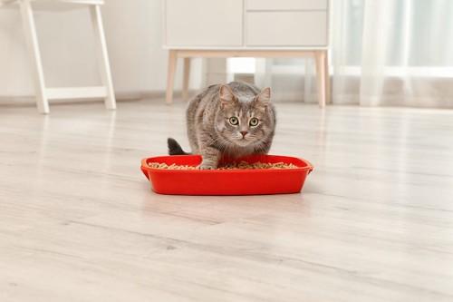 赤いトイレに足を踏み入れた猫