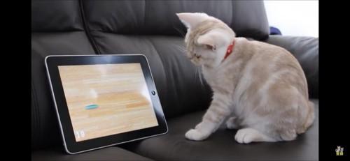 猫用アプリゲームを見つめる猫