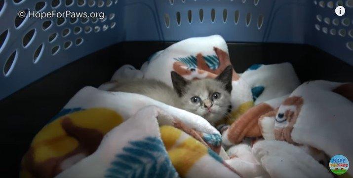 病院に到着した子猫