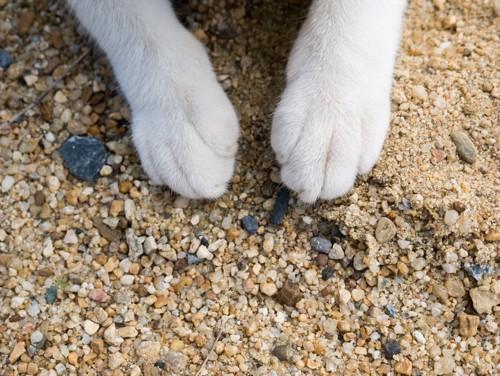 砂の上の猫の手