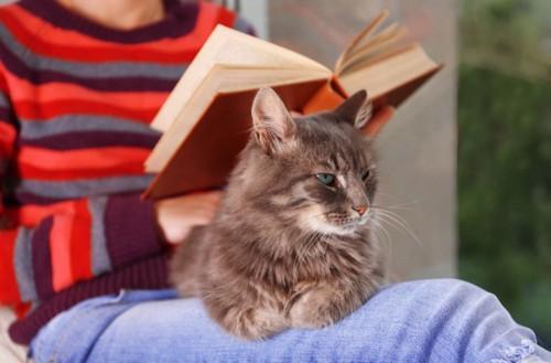 本を読む人の膝の上に乗る猫