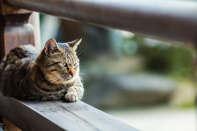 猫神社の境内
