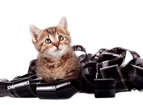 子猫とフィルム