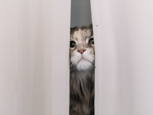 隙間から顔をのぞかせる猫