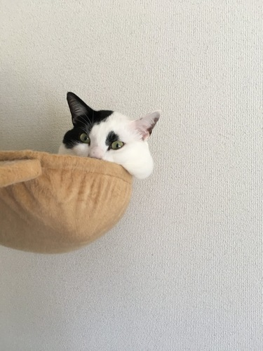 ほっぺがまんまるな猫