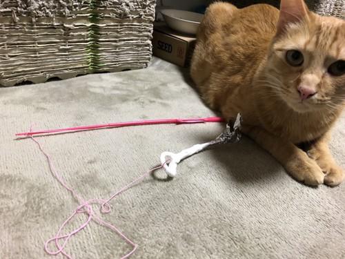 ピンクの竿のアルミホイルじゃらしと猫