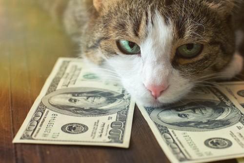 ドル札に顔を置く猫