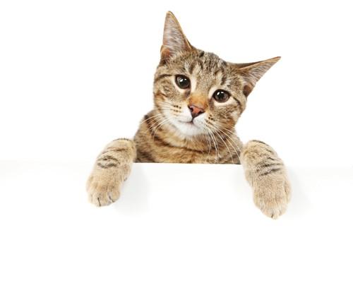 手を掛ける猫
