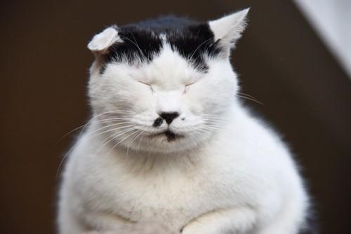 目を閉じている鼻くそ柄の猫
