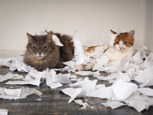 ティッシュと2匹の猫の写真