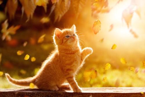 秋の落ち葉が舞う中で遊ぶ子猫