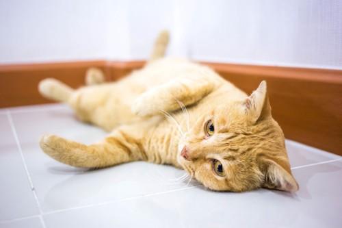 床に寝ころぶ猫
