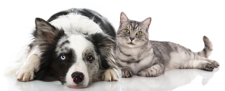 くつろぐ猫と犬