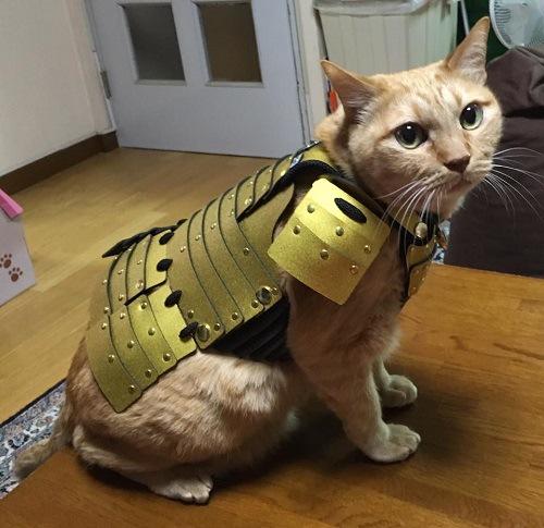 猫の甲冑3