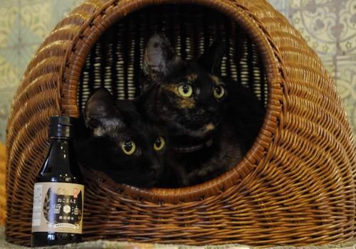 商品と猫3