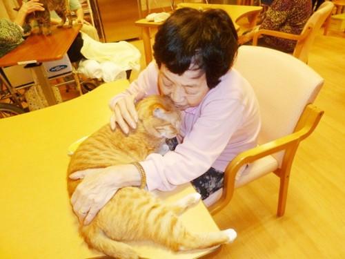 ホームの入居者に撫でられている猫のチョロちゃん