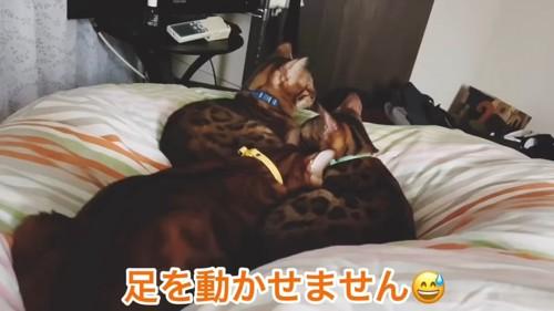 寝そべる3匹の猫