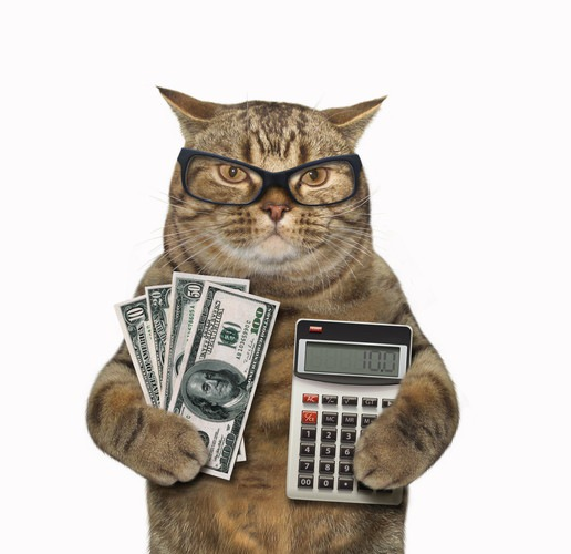 電卓と紙幣を持つ猫