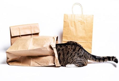 紙袋にもぐる猫