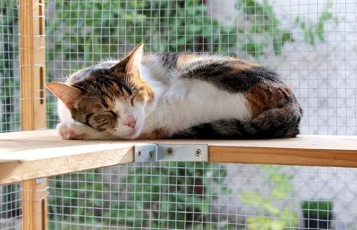 ケージの中で眠る猫