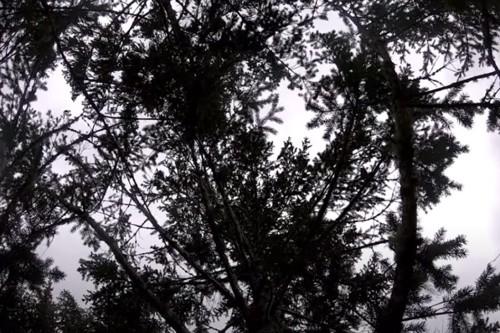 猫のBBが立ち往生する木